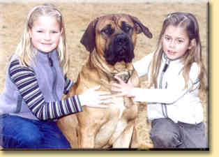 boerboel mum and pups