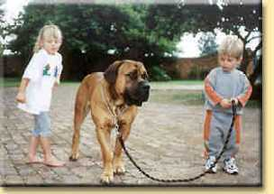 kids and boerboel